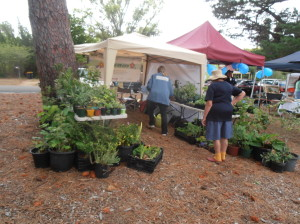 Plant stall at the Australia Day celebrations in Berrima - Rosina and Jill manning the stall