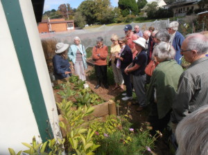 Explaining the workings of our new raised wicking bed.