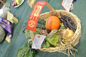 Basket of Organic Show Veges