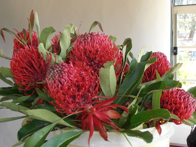 Waratahs for trade through CESH