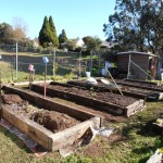 Four new beds built. More soil for the fourth bed will come from our compost bins and green manure