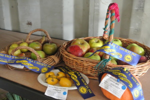 Blue ribbon fruit & veges at the 2015 Moss Vale Show