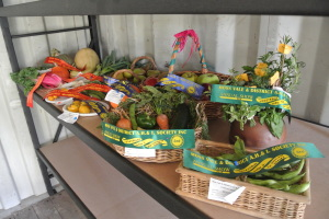 Blue, red and green ribbons drape our first, second and third prize veges and fruit at the Moss Vale Show 2015